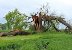 storm-damage-597217_1920.jpg